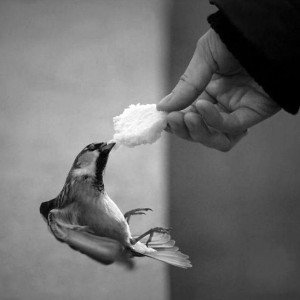 [cml_media_alt id='1139']Hand that feeds a ucellino with a piece of bread[/cml_media_alt]